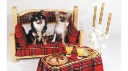 accessori-di-lusso-per-cani