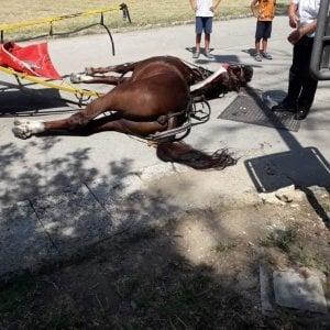cavallo civiltà chiama